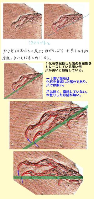 ミクロラプトルの爪に対する誤解